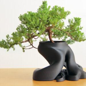 gcreate_bonsai_fullsize_preview_featured